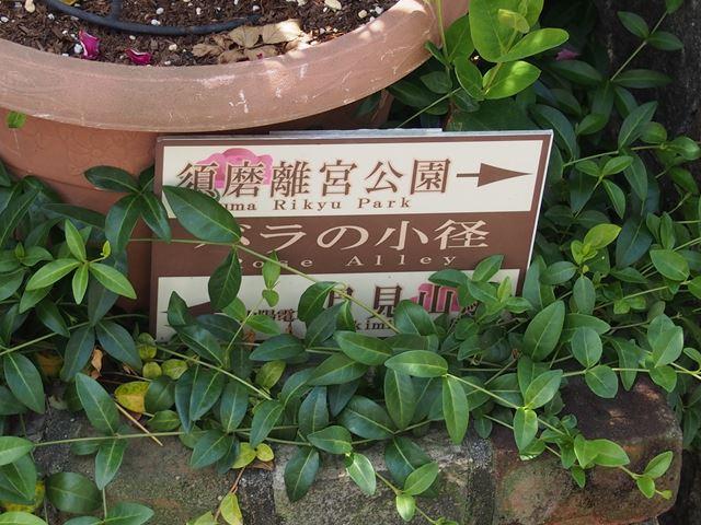 バラの道標2