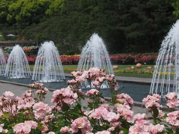 噴水とバラ1