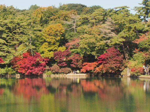 再度山公園の紅葉