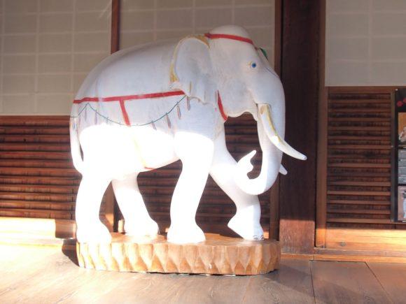 念仏寺の白い象