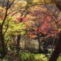 有馬温泉 瑞宝寺(ずいほうじ)公園で紅葉を見てきました ~2015年11月12日~