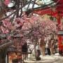 神戸市須磨区の綱敷天満宮へ梅を見に行ってきました。