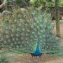 羽を広げた孔雀とフラミンゴの赤ちゃん ~王子動物園(2016年4月)~